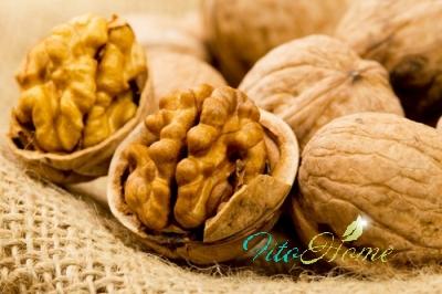 история грецкого ореха