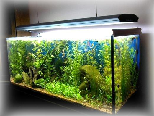 aabde7ff27e624 Практично всі сонники сходяться в одному: риба сниться до вагітності. А ось до  чого сниться акваріум з водою, в якому плавають рибки?