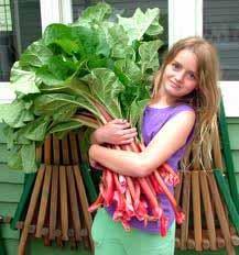 девушка с листьями ревеня