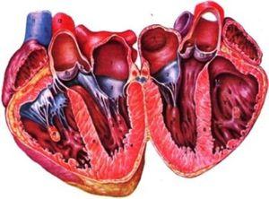 Врожденный дефект (порок), при котором отсутствует трехстворчатый клапан между правым предсердием и желудочком
