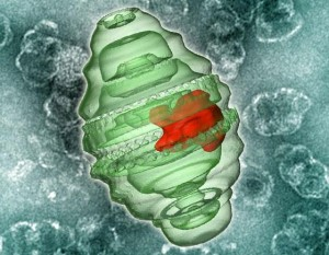 Фактор некроза опухоли