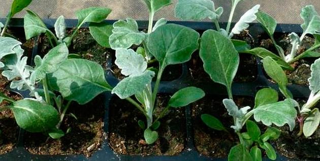 как посадить семена в горшок