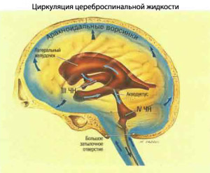 циркуляция ликвора ГМ