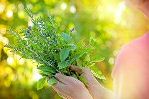 травы в руках