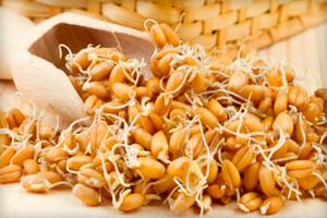Полезные свойства масла зародышей пшеницы и особенности применения