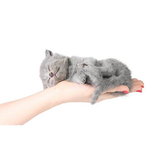 К чему снятся коты серые