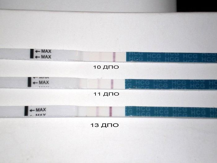 Тесты на разных сроках