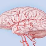 Головной мозг сосуды