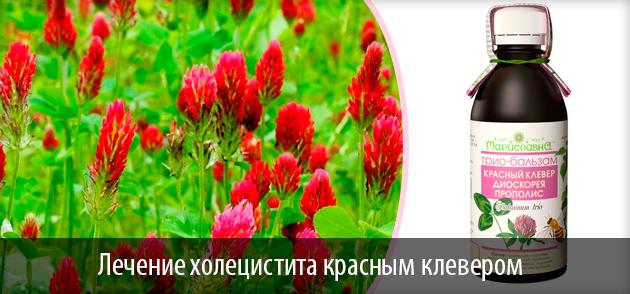 фото растениея