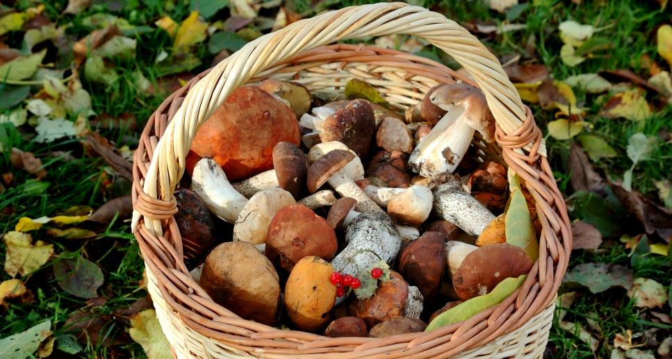 Отравление грибами: почему это происходит?