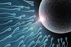 Как улучшить плохую спермограмму?