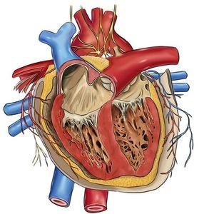 врожденная сердечная аномалия
