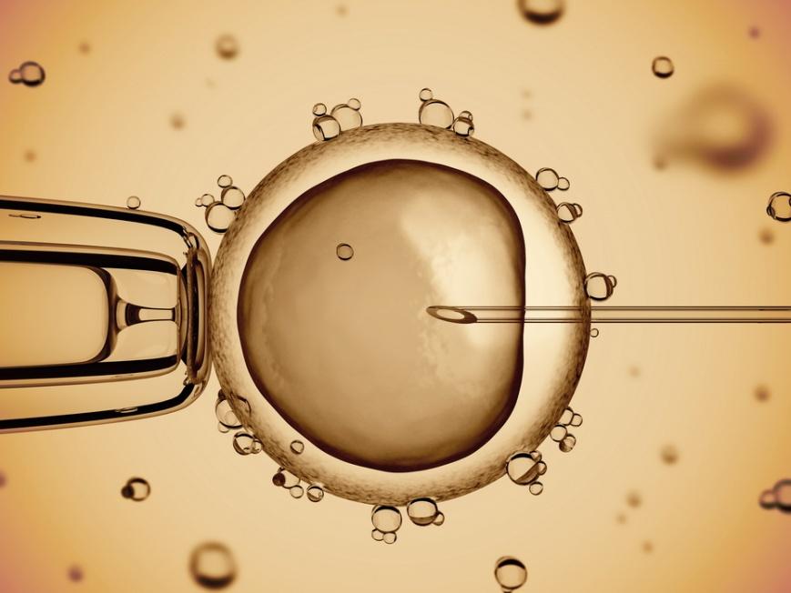 Культивирование эмбрионов при ЭКО: особенности процедуры