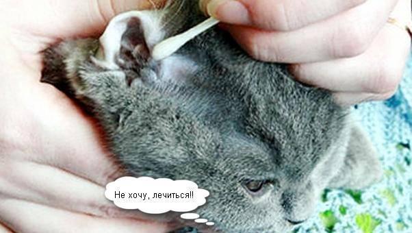 чем лечить кота