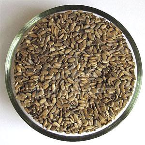 семена татарника