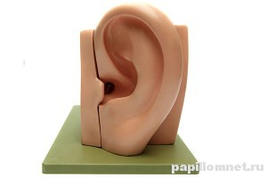 Фото слепка уха к статье о полипах в ушах