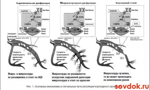 механизмы регуляции коронарного кровотока