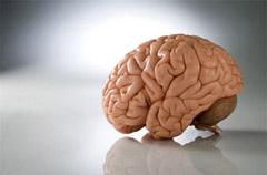 Головной мозг новорожденного
