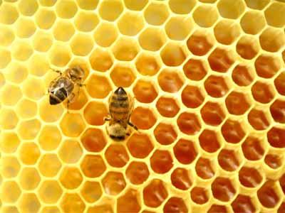 соты, пчелы, мед