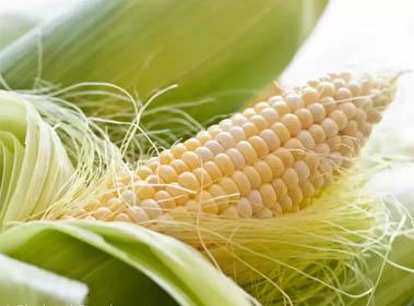 рыльца спелой кукурузы