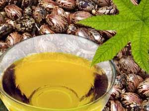 семена клещевины, касторовое масло