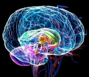 головной мозг нервы