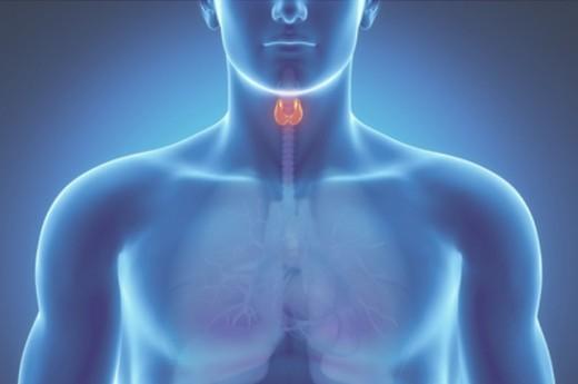 схема щитовидной железы