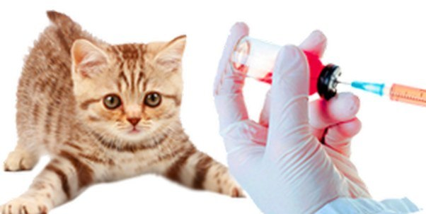 сделать вакцину коту