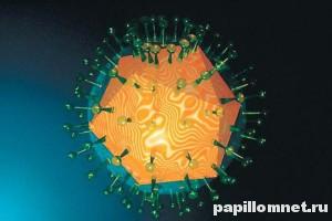 Условное представление вируса простого герпеса