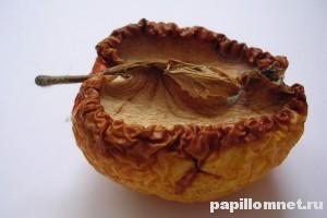 Фото яблока которое используется в процессе заговора бородавки